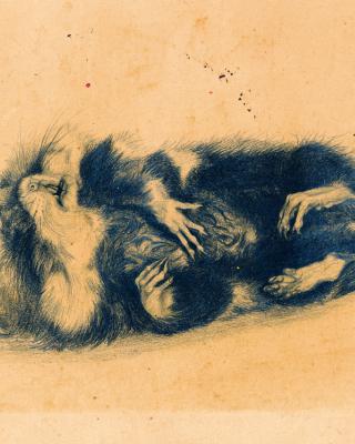 Der tote Hamster, 1944, Bleistiftzeichnung, 15 x 21 cm